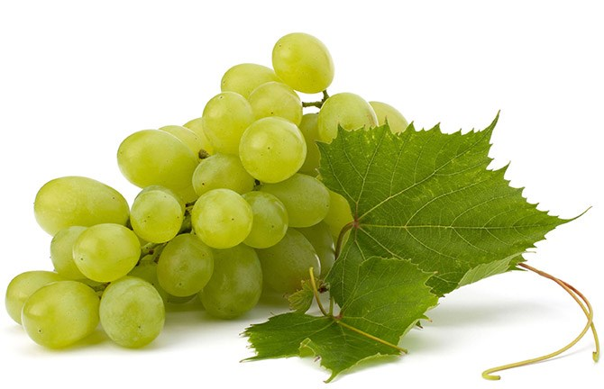 Early sweet grape